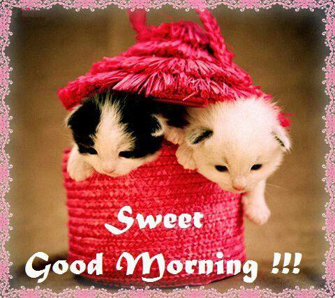 Sweet Morning Wish-wm1147