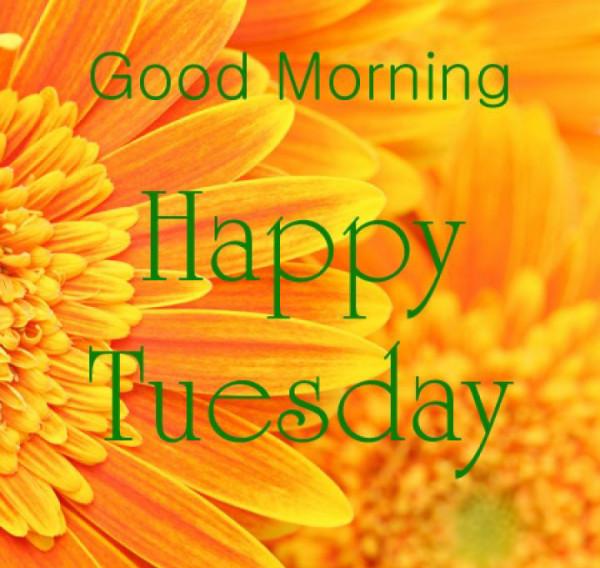 Tuesday Morning !-wm739
