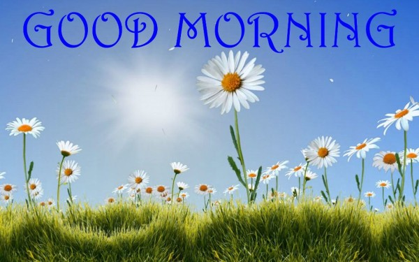 Wishing You A Good Morning-wm13139