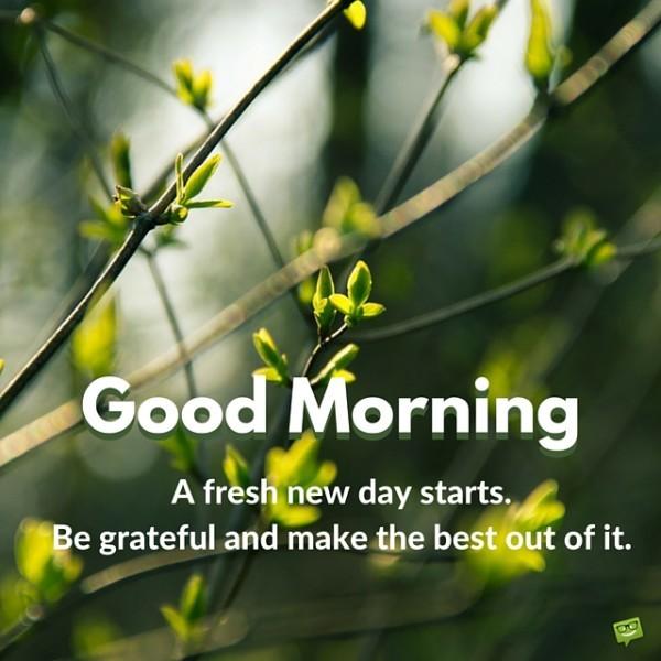 A Fresh New Day Starts - Good Morning-wg01701