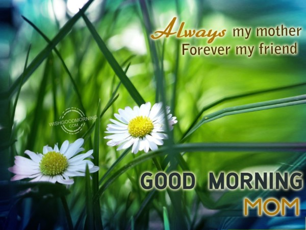 Always My Mother Forever My friend-Good Morning-wg9503
