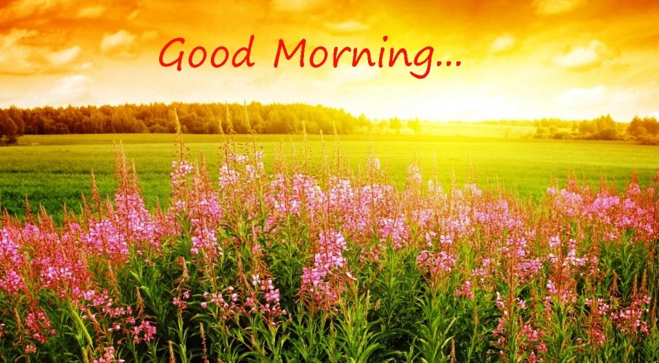 Good Morning In Spanish To A Lady : Amazing morning image