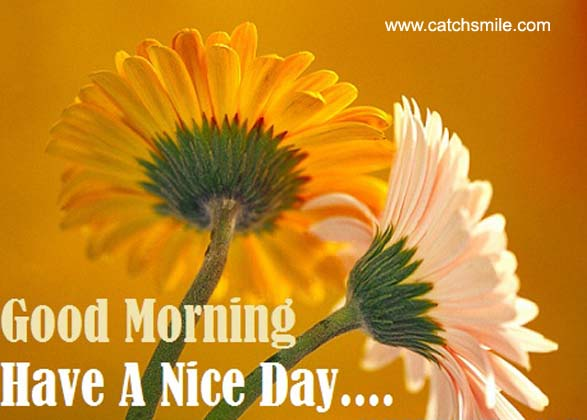 Beautiful Morning Flowers