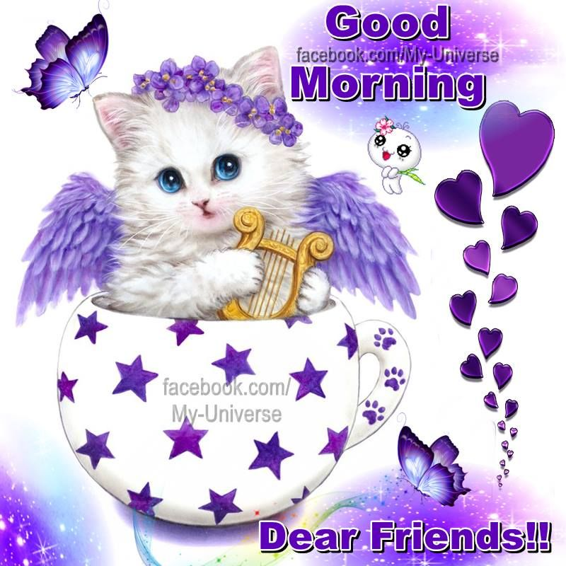 Good Morning Cute : Cute cat wishing good morning