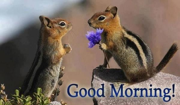 Cute Morning Wish-wg66