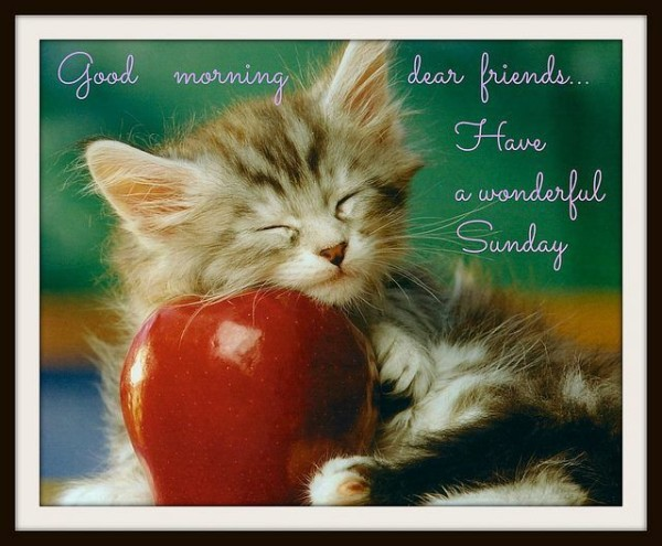 Dear Friend Have A Wonderful Sunday-wg015012