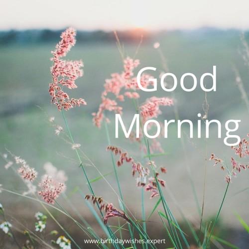Fantastic Morning Image-wg015015
