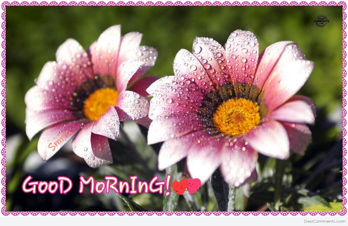 Good Morning Beautiful Flowers Image