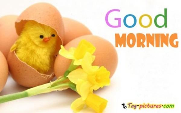 Good Morning - Cute Chicken-wg03407