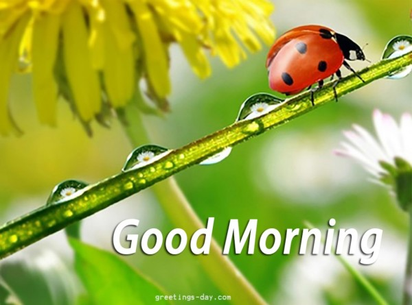 Good Morning - Cute Insect-wg01713