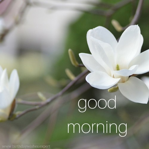 Good Morning Dear Images : Good morning wishes for friend pictures images page