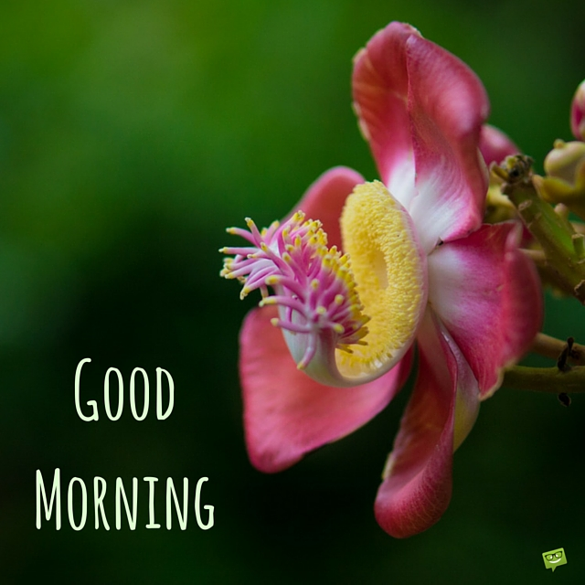 Good Morning Wishes With Flowers - 217.1KB