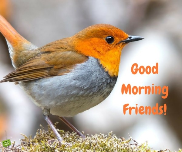 Good Morning Friends - Bird-wg017055