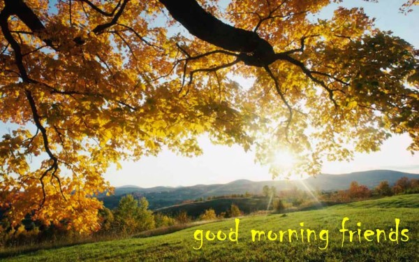 Good Morning Friends -  Nature-wg017054