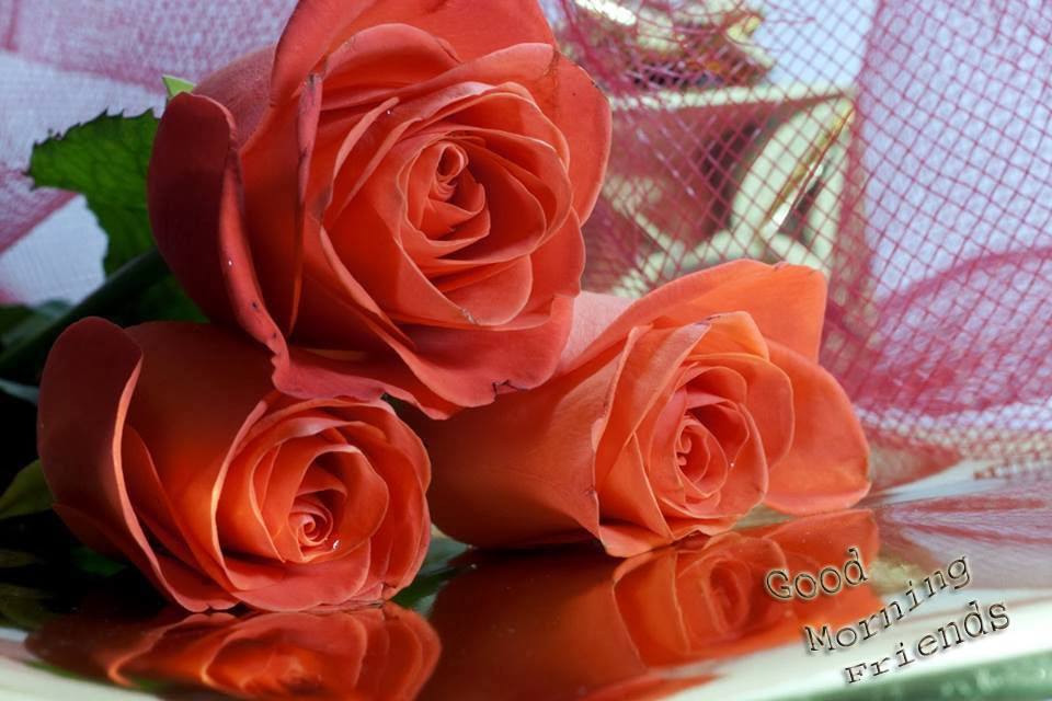 Morning Good friend with roses pictures