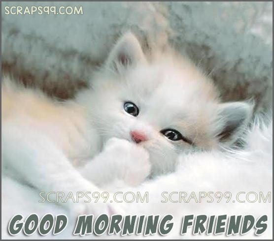 Good Morning Friends - White Cat-wg0544
