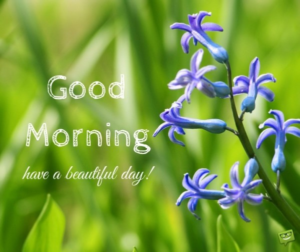 Good Morning Have A Beautiful Day !!-wg017062