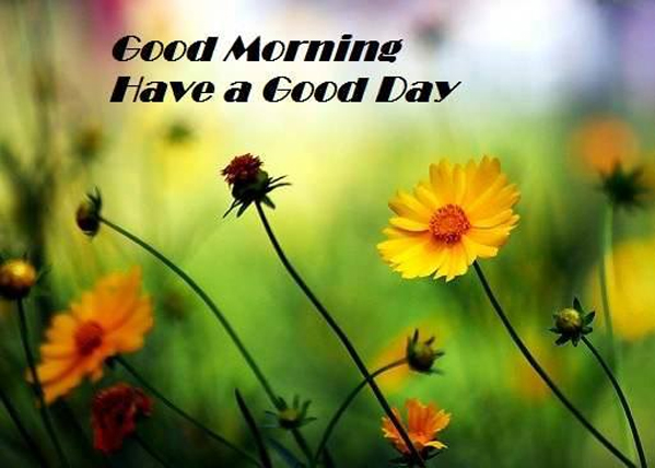 Good Morning Have A Good Day-wg017067