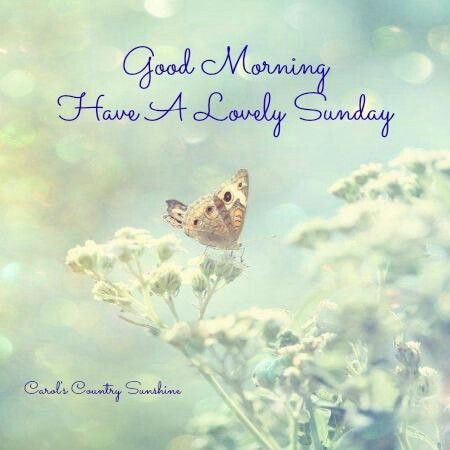 Image result for have a lovely sunday