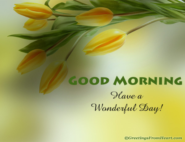 Good Morning Have A Wonderful Day-wg017076