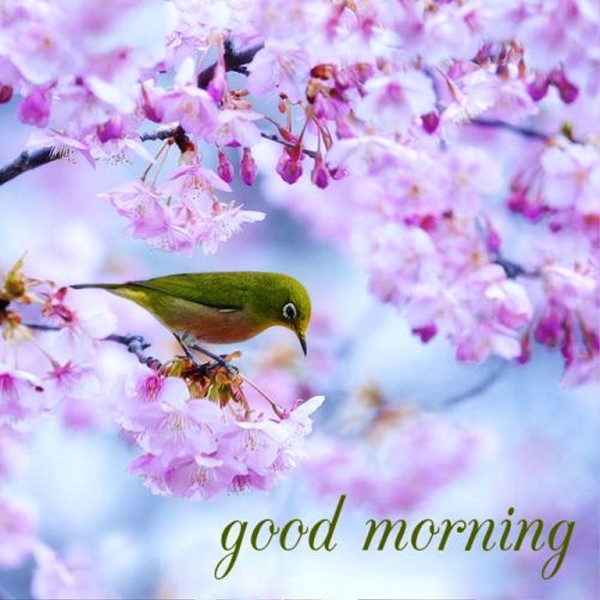 Good Morning Hope U Have The Best Day !-wg01330