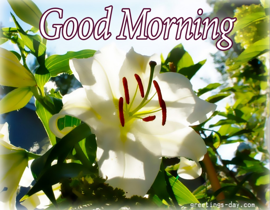 Downloadable Thursday Morning Greetings Happy Thursday Wishes
