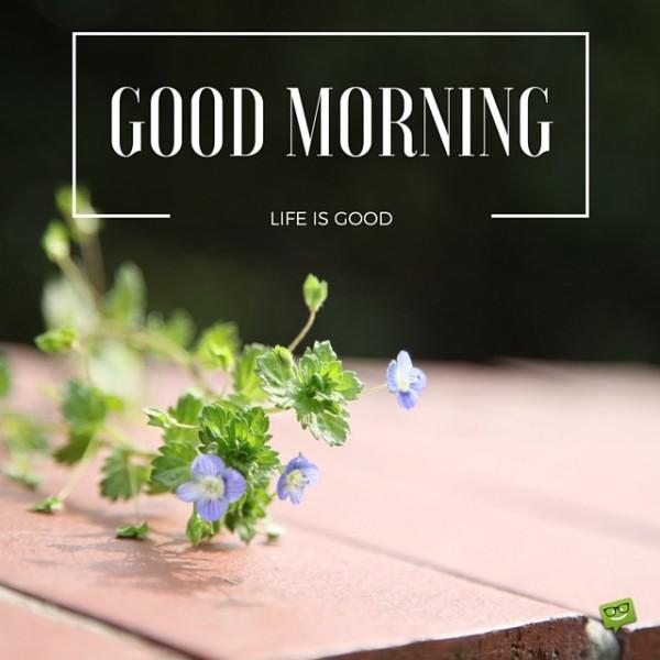 Good Morning Life Is Good-wg017079