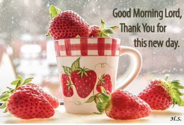 Good Morning Lord - Thank You-wg017080