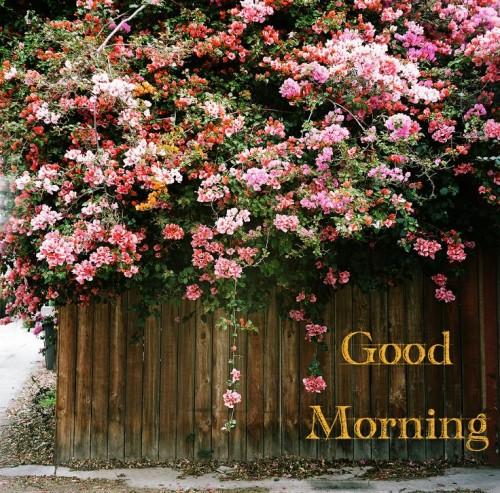 Good Morning – Lovely Flowers