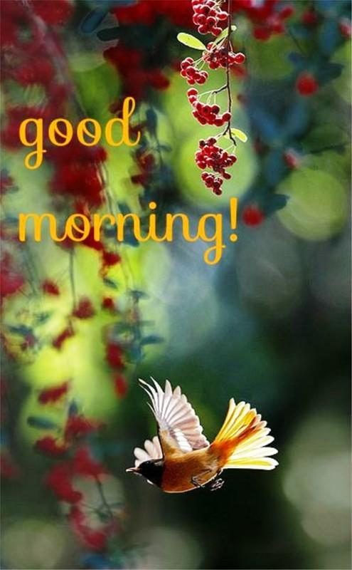 Good Morning - Photo-wg01313