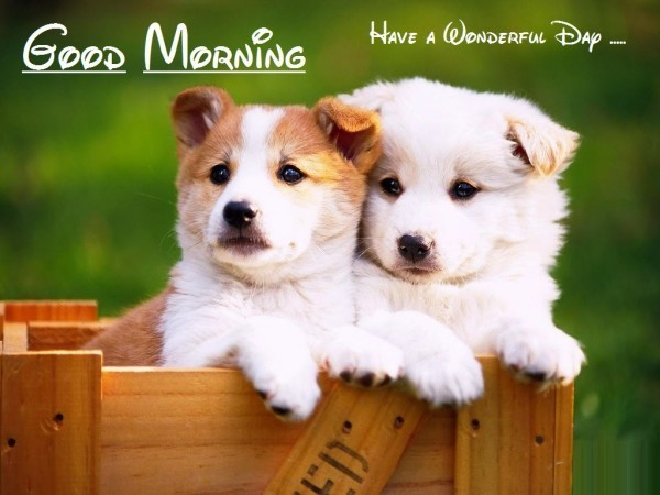Good Morning - Puppies Image-wg015027