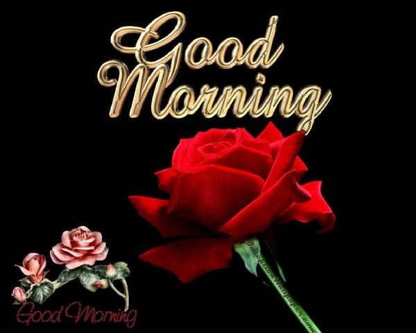 Good Morning - Red Rose-wg017038