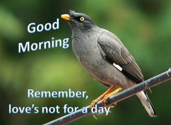 Good Morning - Remember Loves Not For A Day-wg017039