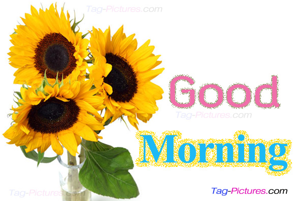 Good Morning - Sunflowers Image-wg01716