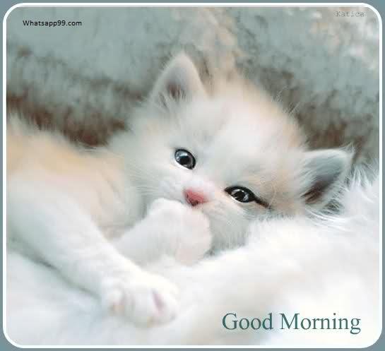 Good Morning - Sweet Cat-wg0193