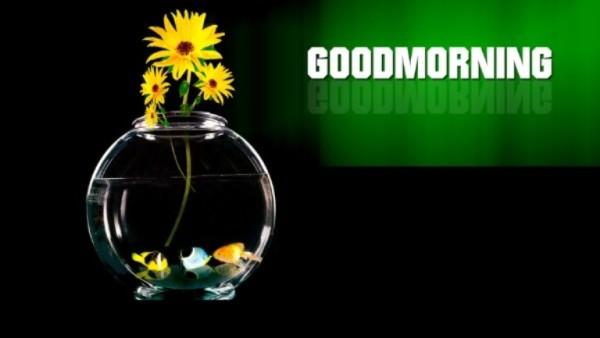 Good Morning - Water-wg03409