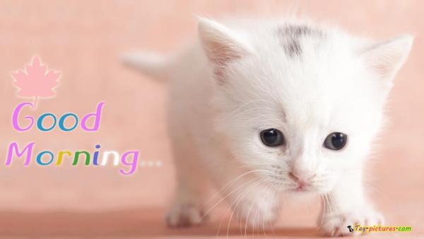 Good Morning - White Cat-wg0543