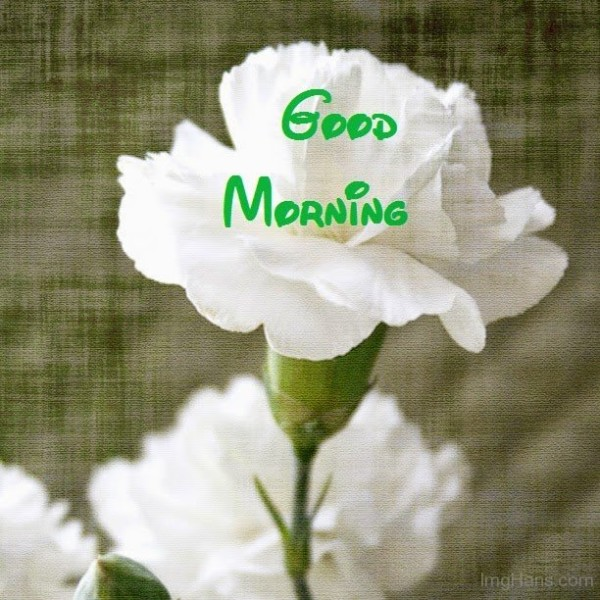 Good Morning – White Flower