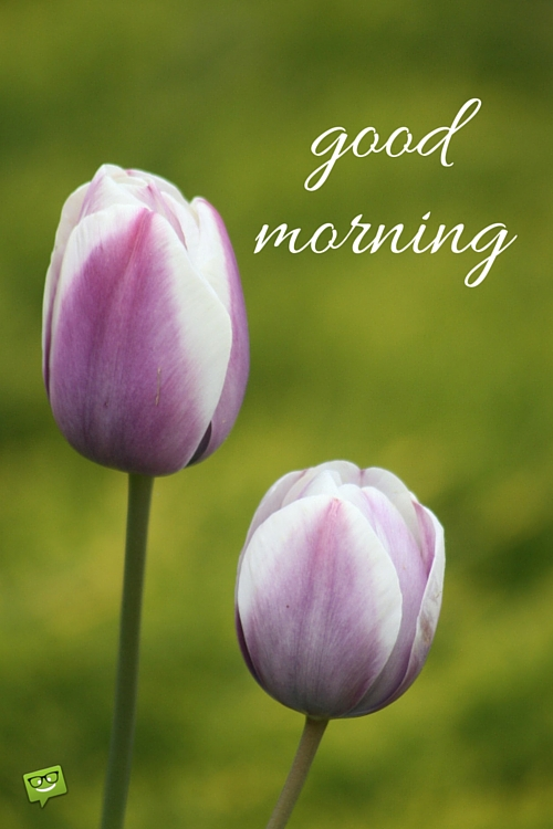Good Morning Wiith Tulip !-wg017091