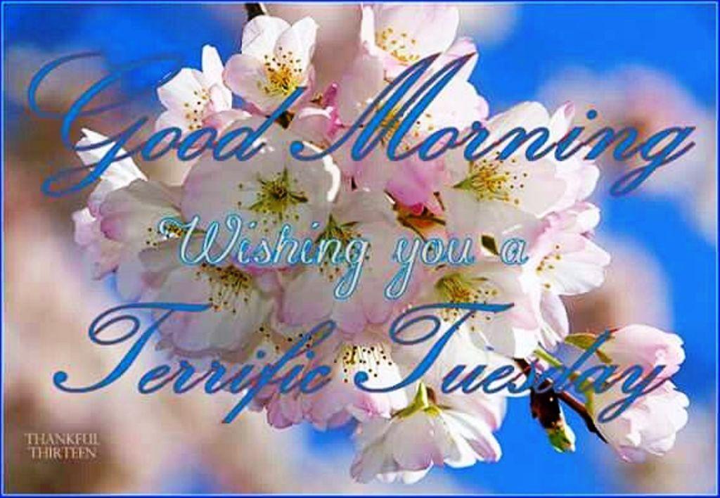 Good Morning Wishing You A Terrific Tuesday