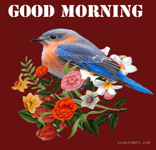 Good Morning With Bird-wg01738
