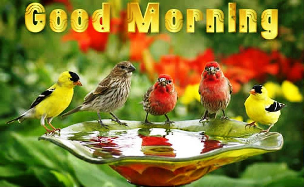 Love Birds Good Morning Wallpaper : Good Morning Wishes With Birds Pictures, Images - Page 12