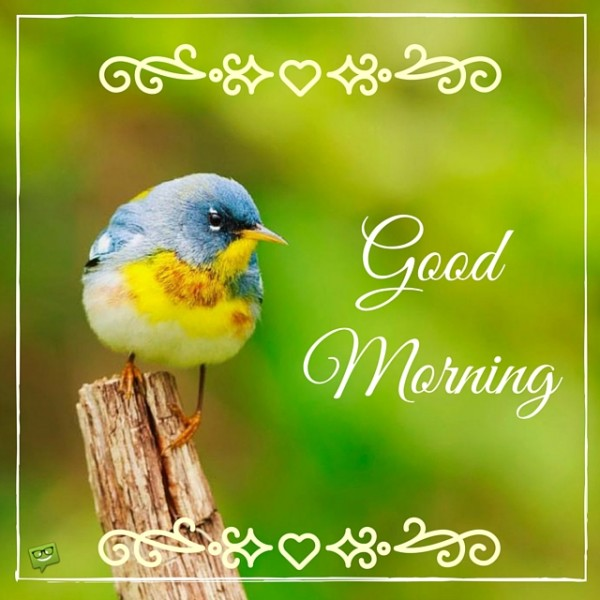 Good Morning With Colorful Bird !-wg017100