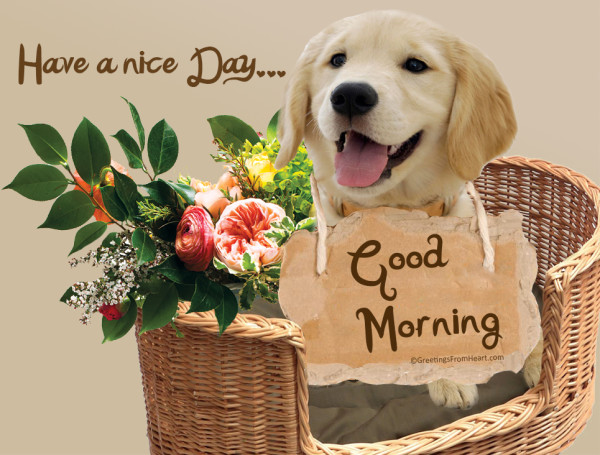 Good Morning With Dog-wg002