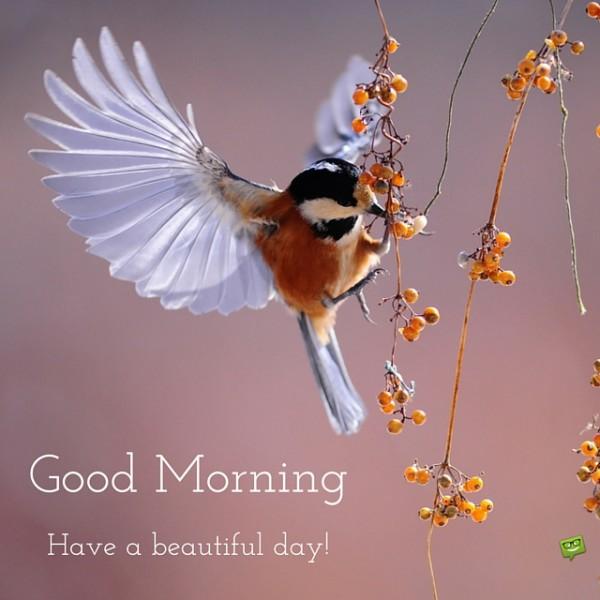 Good Morning With Flying Bird-wg017106
