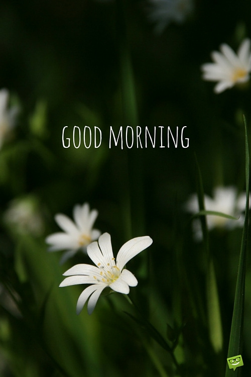 Good Morning With Little Flowers-wg017108