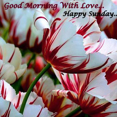 Good Morning With Love Happy Sunday !-wg017110