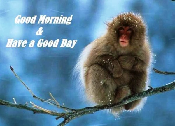 Good Morning With Monkey Image-wg01346