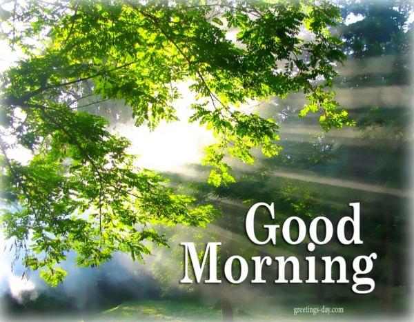 Good Morning With Nature !-wg017112