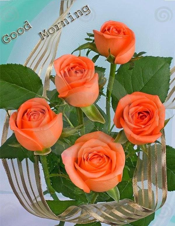 Good Morning Orange Flowers : Good morning with orange roses